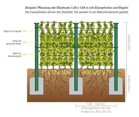 Pflanzung: immergrüne Hecke als Elemente